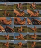 AdamBlack_Romantik_in_Natur.jpg